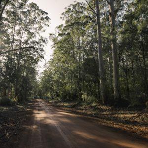 Karri Forest, Pemberton, Western Australia
