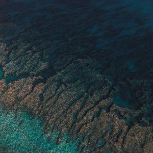 Coral, Exmouth, Western Australia